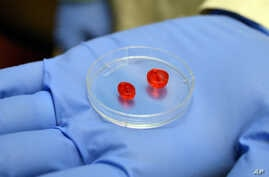 FILE - A 3-D printer was used to construct these tiny two-ventricle cylinders at the University of Louisville, in Louisville, Ky. Israeli 3-D printer manufacturer Nano Dimension, and Accellta, a company that produces IPS cells, now say they have test