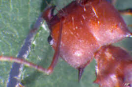 Leaf-cutter ants have powerful blades on either side of their head.