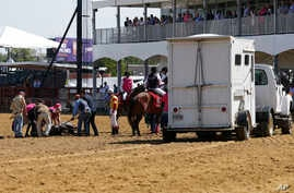Officials tend to Congrats Gal after the horse collapsed at Pimlico Race Course, May 17, 2019, in Baltimore.