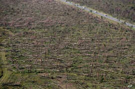 FILE - Downed trees are seen from the air on Tyndall Air Force Base in the aftermath of Hurricane Michael near Mexico Beach, Fla., Oct. 12, 2018.