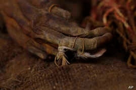 This Aug. 15, 2019 photo shows a 500-year-old mummy of an Incan girl clinging to bird feathers, inside a vault at the National Museum of Archaeology in La Paz, Bolivia.