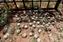 FILE - Cluster bomblets are gathered in a field in al-Tmanah town in southern Idlib countryside, Syria, May 21, 2016.