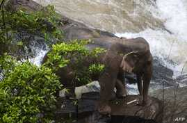 Photo by Thai News Pix taken on Oct. 5, 2019, shows two elephants trapped on a cliff at a waterfall at Khao Yai National Park.