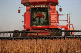 A man harvests the soybeans in the field at the Bardole & Son's Ltd farm in Rippey, Iowa, Oct. 14, 2019.
