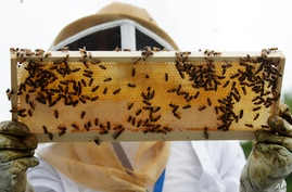 In this Aug. 7, 2019 photo, beekeeper Karen Eaton holds a frame of bees as she instructs veterans at the VA's beehives