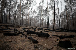 Burnt tree logs are seen in the fire-grounds near Batemans Bay, Australia January 8, 2020. REUTERS/Alkis Konstantinidis -…
