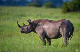 Photo by: KGC-375/STAR MAX/IPxUndated picture released by Kensington Palace of Prince Harry who is the new Patron of Rhino…