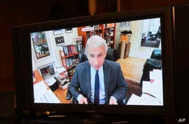 Dr. Anthony Fauci, director of the National Institute of Allergy and Infectious Diseases speaks remotely