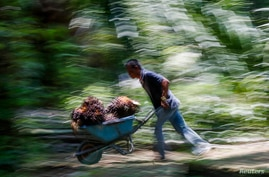 An Indonesian worker pushes a cart of palm oil fruits at Felda Bukit Cerakah in the district of Klang, outside Kuala Lumpur…