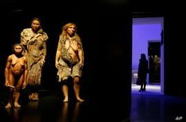 """From left, models representing Flores, Homo Sapiens and Neanderthal women stand in the """"Musee des Confluences"""", a new science…"""