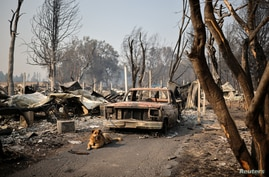 A dog is tied up to a burnt car in a neighbourhood after wildfires destroyed an area of Phoenix, Oregon, U.S., September 10,…