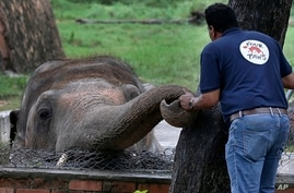 A veterinary from the international animal welfare organization 'Four Paws' offers comfort to an elephant named 'Kaavan' prior…