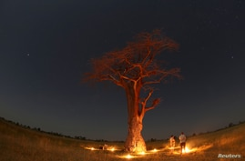 Guests stand beneath a Baobab tree illuminated by fire in the Okavango Delta, Botswana, April 25, 2018. Picture taken April 25,…