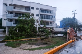A tree lays on its side, toppled by Hurricane Delta in Cancun, Mexico, Oct. 7, 2020.