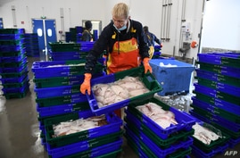 FILE - Workers unload fish at the port of Roscoff, western France, Nov. 12, 2020.