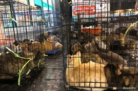 Cats are seen after being rescued from abandoned houses in Bangkok, Thailand, February 25, 2021. Picture taken February 25,…