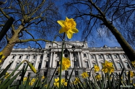 Daffodils bloom in front of the Treasury building, ahead of Wednesday's budget being delivered by Britain's Chancellor of the…