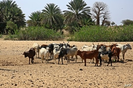 A picture shows the South Darfur village of Hamada, north of the region's capital town Nyala on February 3, 2021, as residents…