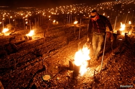 A wine grower lights heaters early in the morning, to protect vineyards from frost damage outside Chablis, France, April 7.