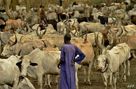 A Dinka man stands at a cattle camp in Toch, Warrap state in South Sudan on April 24, 2016. - The camp houses over 10,000…