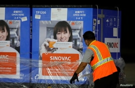 A worker unwraps containers carrying a batch of China's Sinovac coronavirus disease (COVID-19) vaccine.