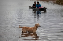 A dog looks on as people cross a flooded road in a canoe caused by River Wawa Boom after the passage of Hurricane Iota in Bilwi…