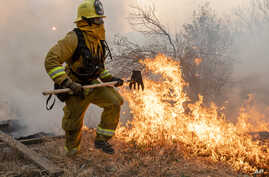 A firefighter from San Matteo helps fight the Kincade Fire in Sonoma County, Calif., on Sunday, Oct. 27, 2019. (AP Photo/Ethan…