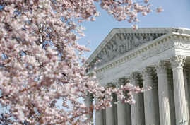 FILE - In this March 16, 2020, file photo, a tree blooms outside the Supreme Court in Washington. The Supreme Court ruled…