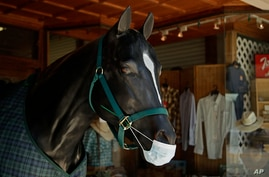A faux horse wears a mask at the storefront entrance of Christesen's Western Wear clothing shop on Tuesday, July 14, 2020, in…