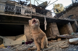 A cat sits in the yard of a house destroyed by shelling by Azerbaijan's artillery during a military conflict in Stepanakert,…