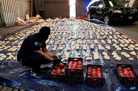 In this photo released by Saudi Press Agency, a Saudi custom officer opens imported pomegranates, as customs foiled a attempt…