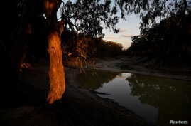 The trunk of a gum tree glows as the sun sets over what is left of the Darling River in Menindee, Australia, September 29, 2019…