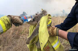 Fire and Rescue NSW team give water to a koala as they rescue it from fire in Jacky Bulbin Flat, New South Wales, Australia…