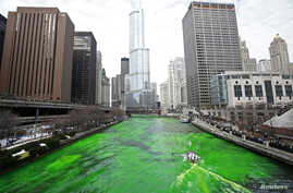 The Chicago River is dyed green during St. Patrick's Day celebrations in Chicago March 15, 2014. REUTERS/Jim Young (UNITED…