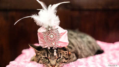 Sakie wears a turban at backstage before the Algonquin Hotel's Annual Cat Fashion Show in the Manhattan borough of New York City, New York, U.S., Aug. 1, 2019.