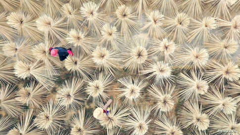 Villagers work on drying bamboo products in bunches for making chopsticks in Lijiang county, Jian, Jiangxi province, China.