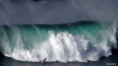 A surfer drops in on a large wave at Praia do Norte in Nazare, Portugal.