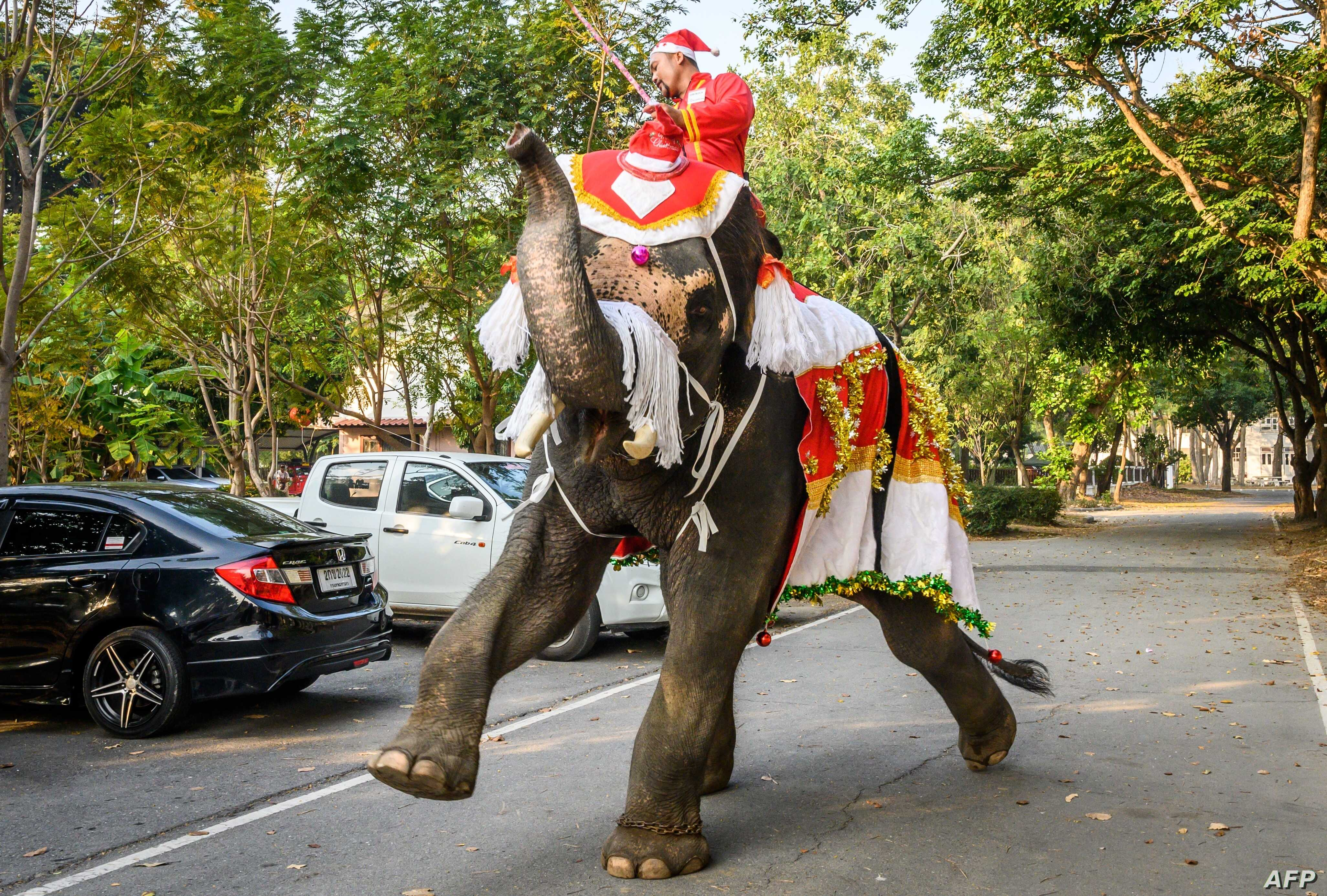 A mahout trains his elephant dressed in a Santa Claus costume before a gift presentation to schoolchildren during Christmas celebrations in Ayutthaya, Thailand, Dec. 23, 2019.