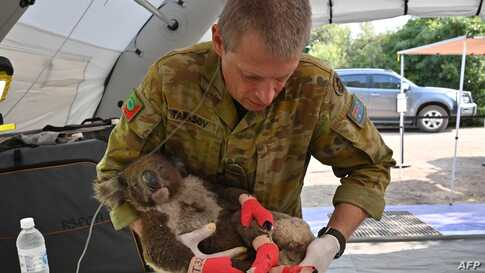 A member of the Australian Defence ForceaA member of the Australian Defence Force picks up an injured Koala after it was treated for burns at a makeshift field hospital at the Kangaroo Island Wildlife Park on Kangaroo Island.picks up an injured Koala after it was treated for burns at a makeshift field hospital…