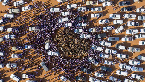 Cars and people surround camels for sale during the annual King Abdulaziz Camel Festival in Rumah, some 160 kilometers east of Riyadh, Saudi Arabia.