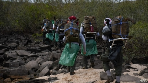 In this handout picture released by Galapagos National Park, park rangers move chelonidis hoodensis turtles before being released in the area called Las Tunas, 2.5 km from the coast of Espanola Island in the Galapagos archipelago, Ecuador, June 15, 2020.