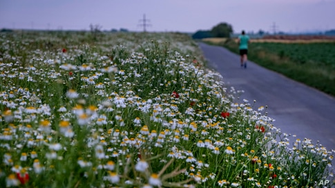 A man runs along a field of marguerites on the outskirts of Frankfurt, Germany.