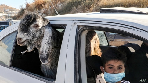 A boy, clad in mask due to the COVID-19 coronavirus pandemic, rides in a car with a goat just purchased at a Friday animal…