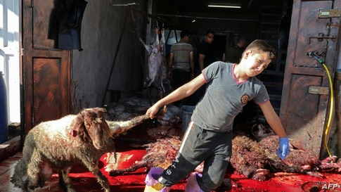 Palestinian Muslimss slaughter animals during celebrations for Eid al-Adha in the West Bank village of village of al-Tweineh on…