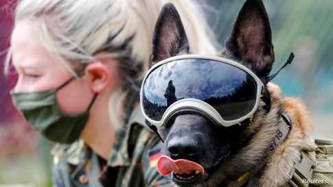 Five-year-old sniffing dog 'Vine' wears protection goggles against the sun and dust as he poses together with Giulia Gausemann…