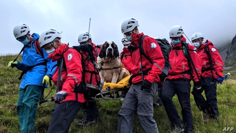 A handout picture released by Wasdale Moutain Rescue on July 26, 2020 shows volunteers carrying Daisy, a 55kg St. Bernard dog down from Scafell pike, one of England's highest peaks near Grasmere in northwest England.