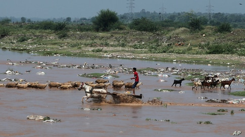 A man crosses the River Tawi on a horse cart in Jammu, India.