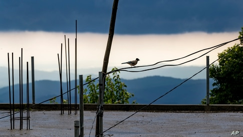 A black-headed jay sits on an electric cable as rain clouds hover over the Kangra Valley in Dharmsala, India.
