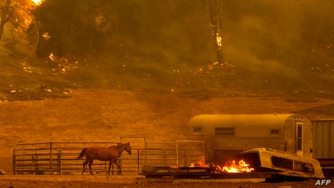 A horse runs by a stall as flames from the Hennessey approach a property in the Spanish Flat area of Napa, California, Aug. 18, 2020.
