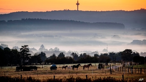 Horses stand in a paddock just before the sun rises in Wehrheim near Frankfurt, Germany.